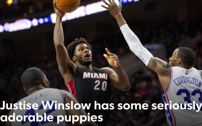 NBA star Justise Winslow has two adorable DSK Bulldogs