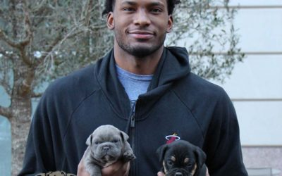NBA Miami Heat superstar Justise Winslow posing with DSK Bulldog puppies while visiting in Dallas